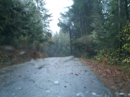 First major storm of the winter brings leaves and branches down on road in North Plains, Oregon. Photography by Lorelle VanFossen.